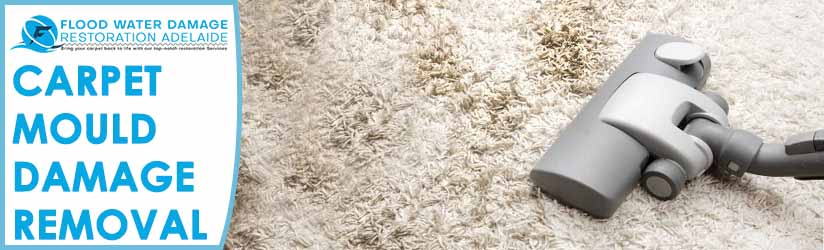 Carpet Mould Damage Removal Adelaide