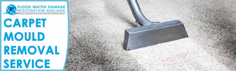 Carpet Mould Removal Service Adelaide