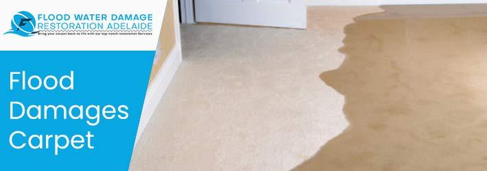 Flood Damaged Carpet