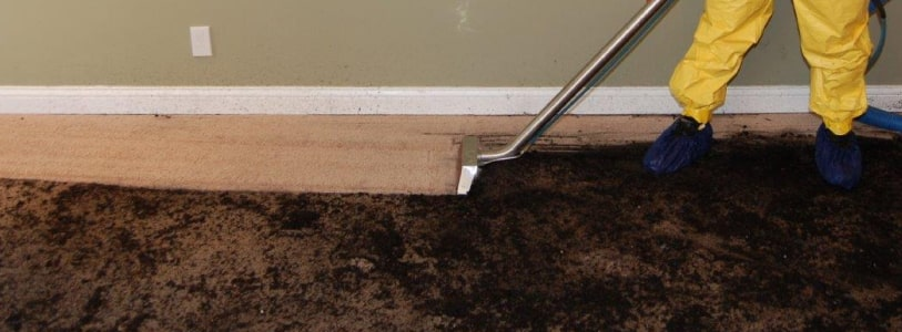 Carpet Sewage Cleaning Service Adelaide