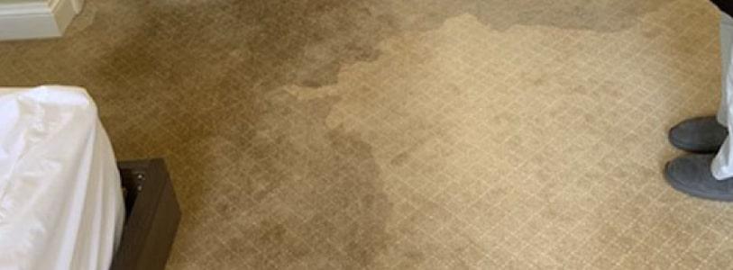 Water Damage Carpet Drying Adelaide